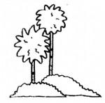 椰子树简笔画图片与资料