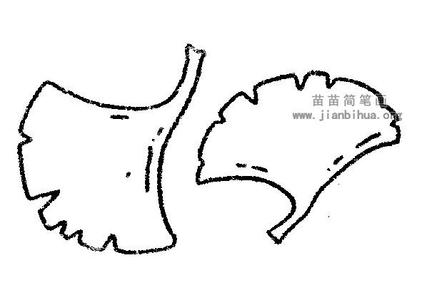 银杏叶简笔画