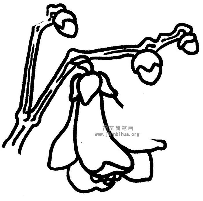 玉兰花简笔画