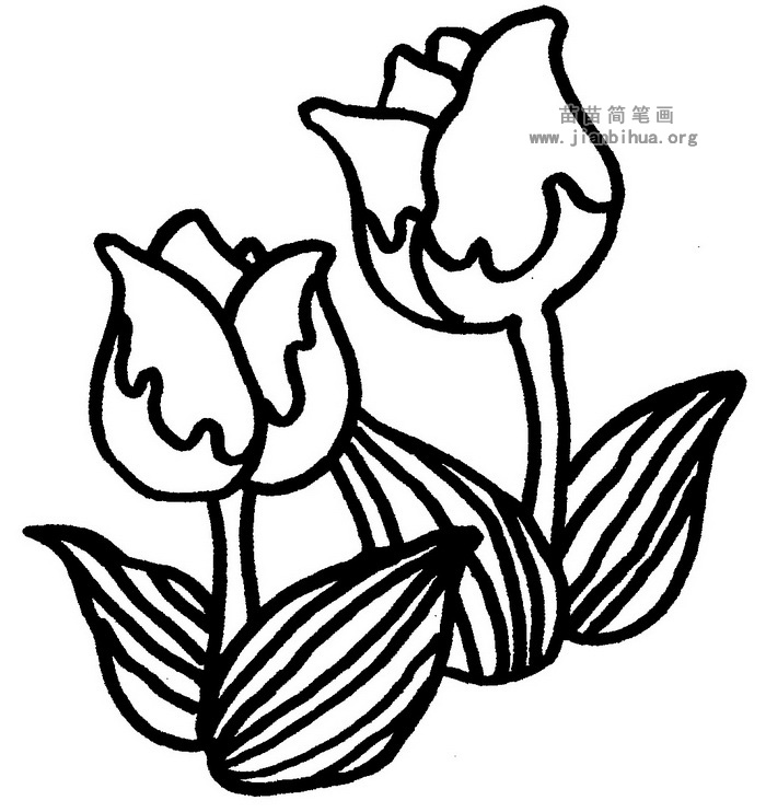 郁金香简笔画图片与资料