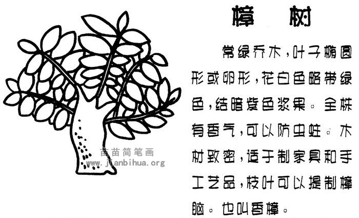 樟树简笔画图片与资料