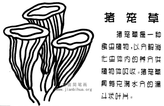 猪笼草简笔画