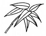 竹叶简笔画图片与资料