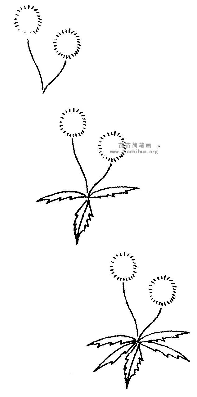 蒲公英简笔画图解教程