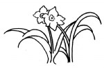 水仙花简笔画、儿歌与知识