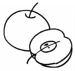 苹果简笔画、儿歌与知识
