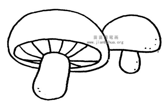蘑菇简笔画 儿歌与知识