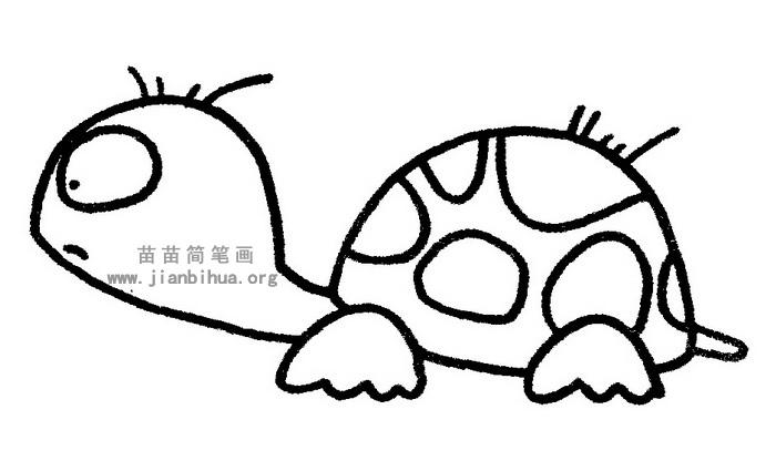 乌龟简笔画 儿歌与知识