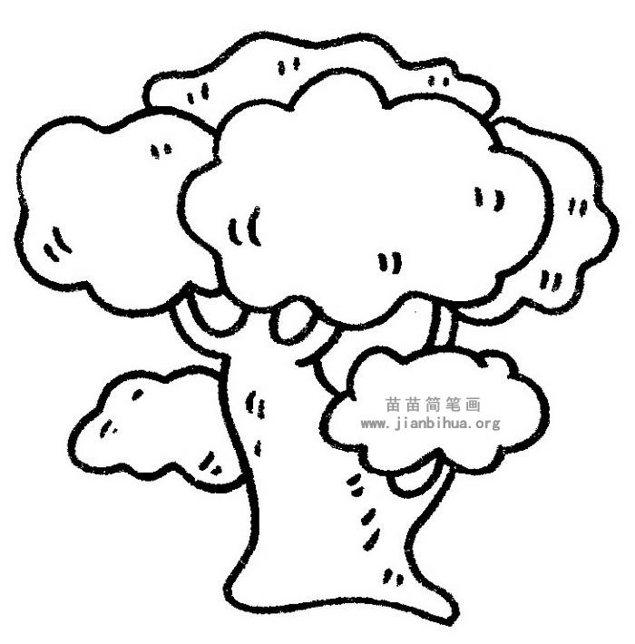 槐树简笔画