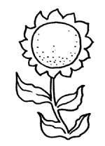 向日葵简笔画、儿歌与知识