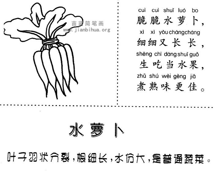 水萝卜简笔画