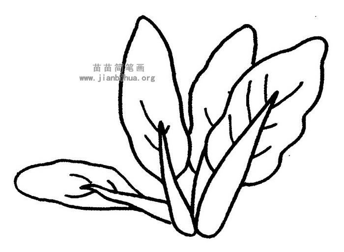 油菜简笔画