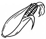 玉米简笔画、儿歌与知识