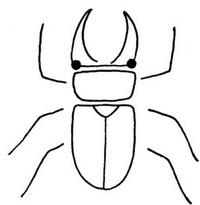 甲虫怎么画简笔画图解