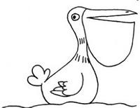 鹈鹕怎么画简笔画图解