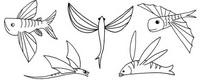 飞鱼怎么画简笔画图解