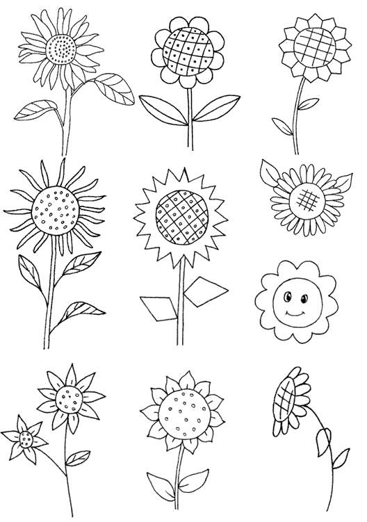 1.画一个圆   2.周围的花瓣   3.花盘上画上格子   4.画上枝叶