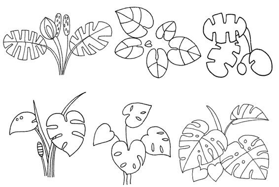 龟背竹怎么画简笔画图解