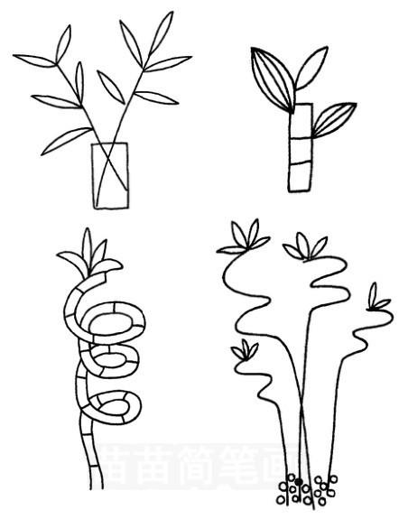 富贵竹怎么画简笔画图解