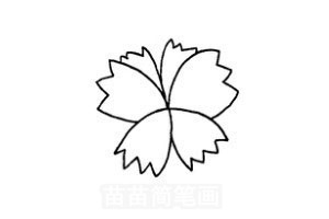 3.画上叶子和弯曲的茎   三色堇又叫蝴蝶花,是多年生草本植物.