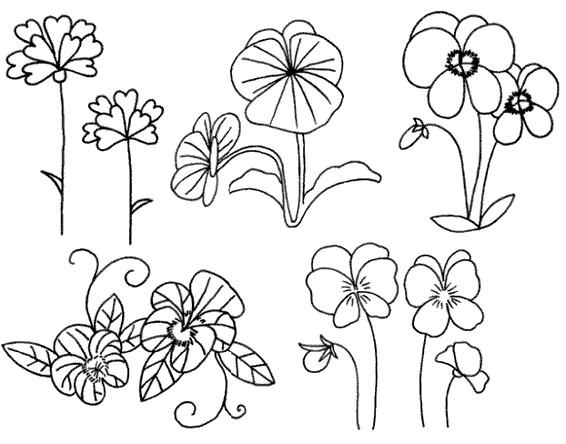 三色堇又叫蝴蝶花,是多年生草本植物.