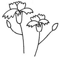 康乃馨怎么画简笔画图解