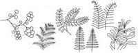 蕨怎么画简笔画图解