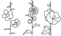 蜀葵怎么画简笔画图解