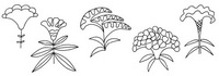 鸡冠花怎么画简笔画图解