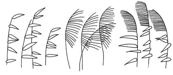 芦苇怎么画简笔画图解