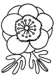 银莲花怎么画简笔画图解