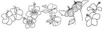 木槿花怎么画简笔画图解