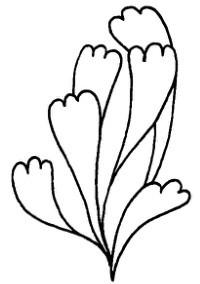 海底植物怎么画简笔画图解