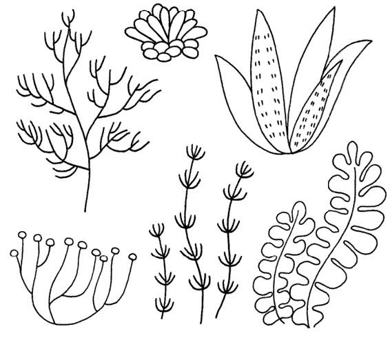 海底植物怎么畫簡筆畫圖解圖片