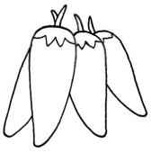 尖椒怎么画简笔画图解