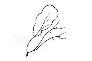 白菜怎么画简笔画图解