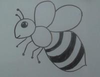 蜜蜂简笔画教程_蜜蜂怎么画视频教程