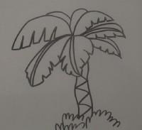 椰子树简笔画_椰子树怎么画简笔画视频教程