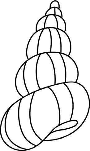 4. 加上纹理是海螺