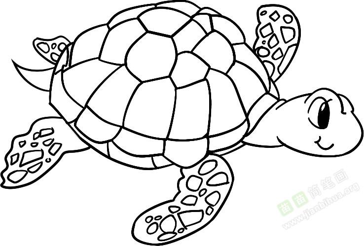 4. 再长后肢和尾巴 关于海龟的知识: 海龟终身生活于海洋中。以鱼类、头足纲、甲壳纲动物及海藻为食。410月为繁殖季节,雌、雄海龟常在礁盘或沿岸水域交配,交尾时间长达34小时,交配后雌龟于晚间爬上岸边沙滩掘坑产卵,先以前肢挖一深度与体高相当的大坑,伏于坑内,再藉后肢交替动作挖一口径20cm、深50cm左右的卵坑,产卵于坑内,产卵一般在夜晚10时至翌晨3时进行,卵产毕后,将卵坑用沙覆盖后离滩返海。每年可产卵23次,每产91157枚,多可达238枚。卵白色,圆球形,卵壳革质而韧软,卵径3558mm