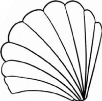 贝壳简笔画图片教程(一)
