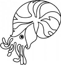 海螺简笔画图片教程(一)