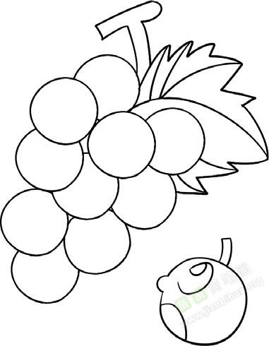 葡萄简笔画图片教程 一图片
