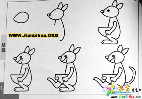 袋鼠动物简笔画图片8张