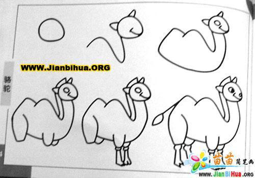 沙漠骆驼简笔画,骆驼图片和简笔画,简笔画 骆驼,骆驼简笔画图片
