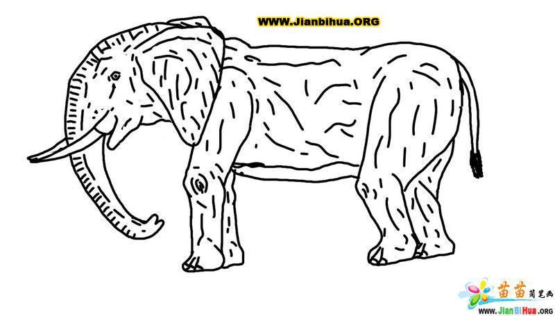 斑马和大象简笔画作品欣赏
