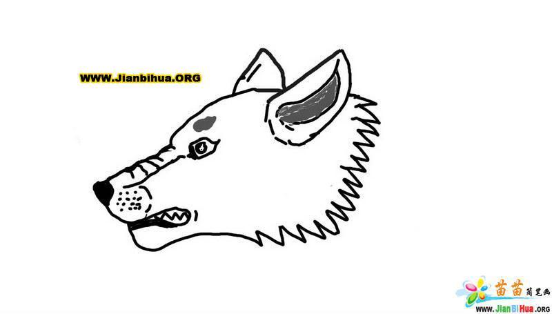 狼的头像简笔画图片图片