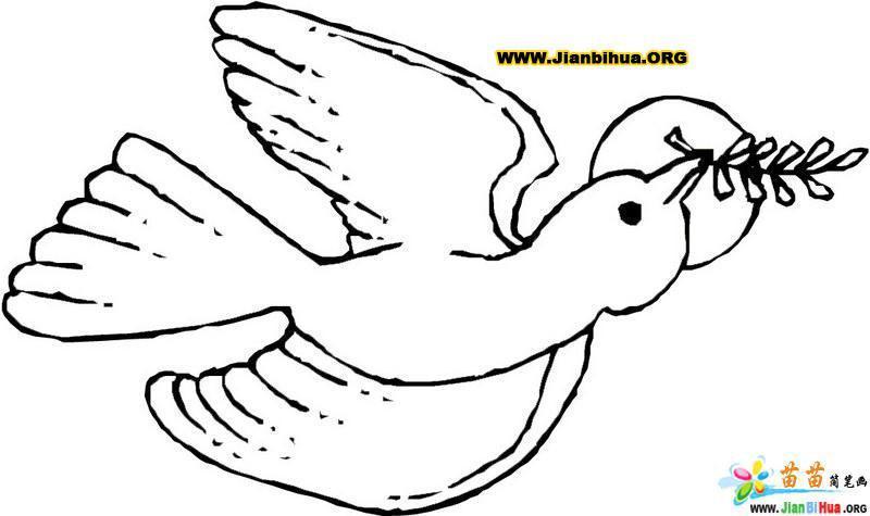 鸽子的简笔画图片