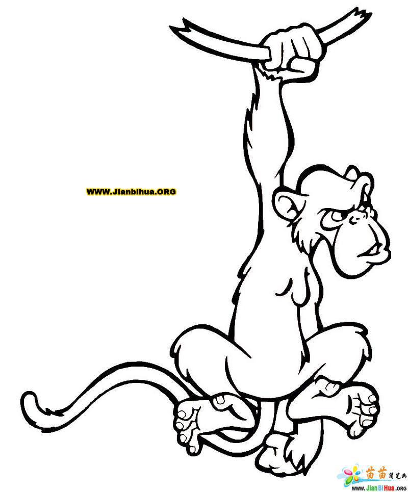 卡通猴子简笔画图片