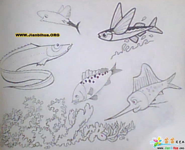 海洋生物简笔画图片42张 第2张